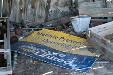old sign in a pile of debris that says Identity Preserved Opportunities - Agricore United