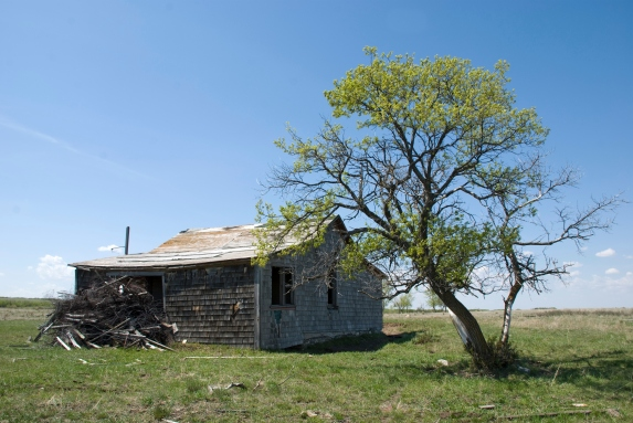 tree next to collapsing abandoned house