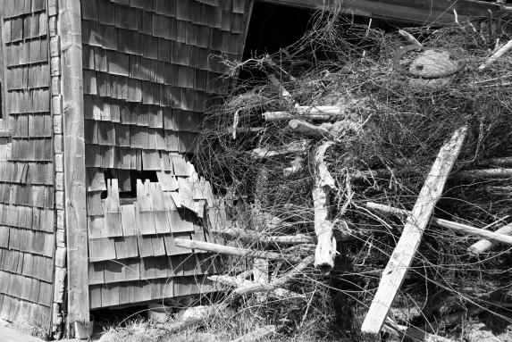 pile of wood and foliage next to abandoned house