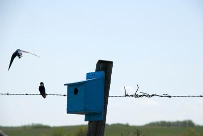 birds flying around a blue birdhouse