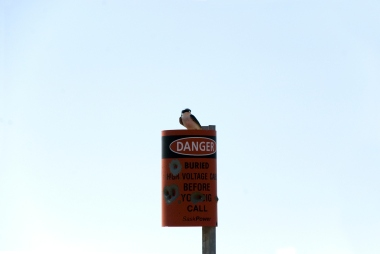 bird sitting on a danger sign full of gunshots