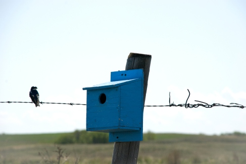 bird on fence wire next to a blue birdhouse