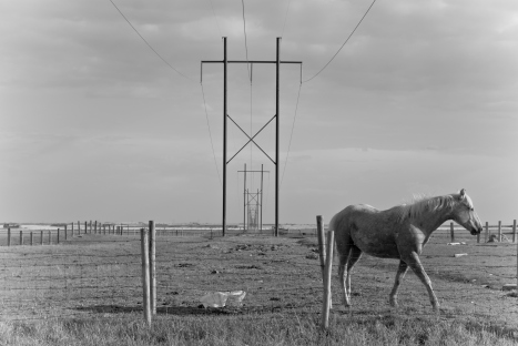 horse and power lines
