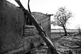 dead tree fallen onto an abandoned house