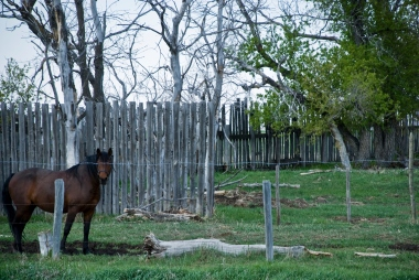 horse next to a variety of fences