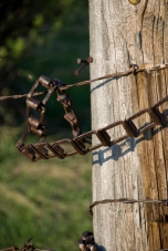 square chain around old fence pole