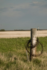 fence post wrapped in barbed wire