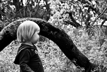 child next to a crooked tree