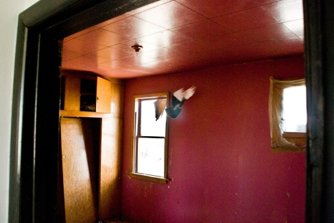 bird flying in pink room in abandoned house