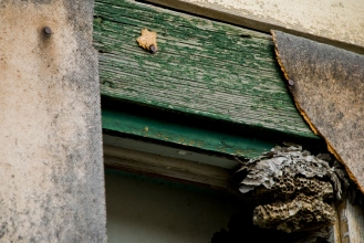 wasp nest in window, also abandoned