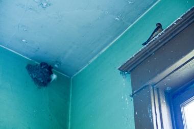 bird and bird nest inside abandoned school