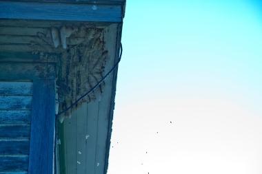 wasp nest on roof of abandoned school, looks like teeth