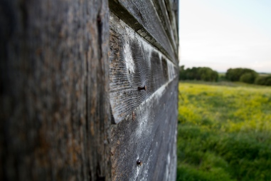 wall of abandoned school, nail poking out of wood