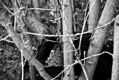 wooden bush