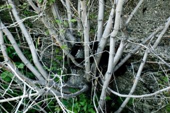 wooden bush next to concrete