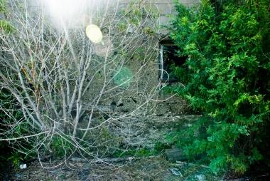 bush, tree, concrete, window