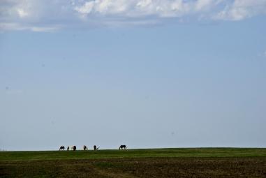 horses on the flat horizon