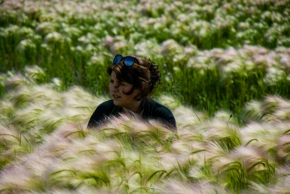 person in field of foxtails