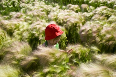 child in red hat in field of foxtails