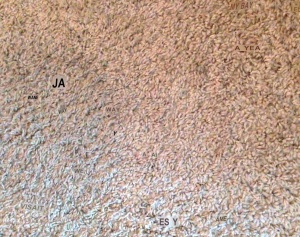 carpet with words in it